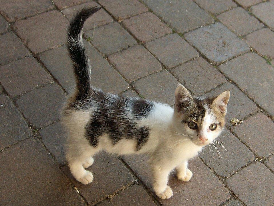Котенок с улицы - советы по уходу