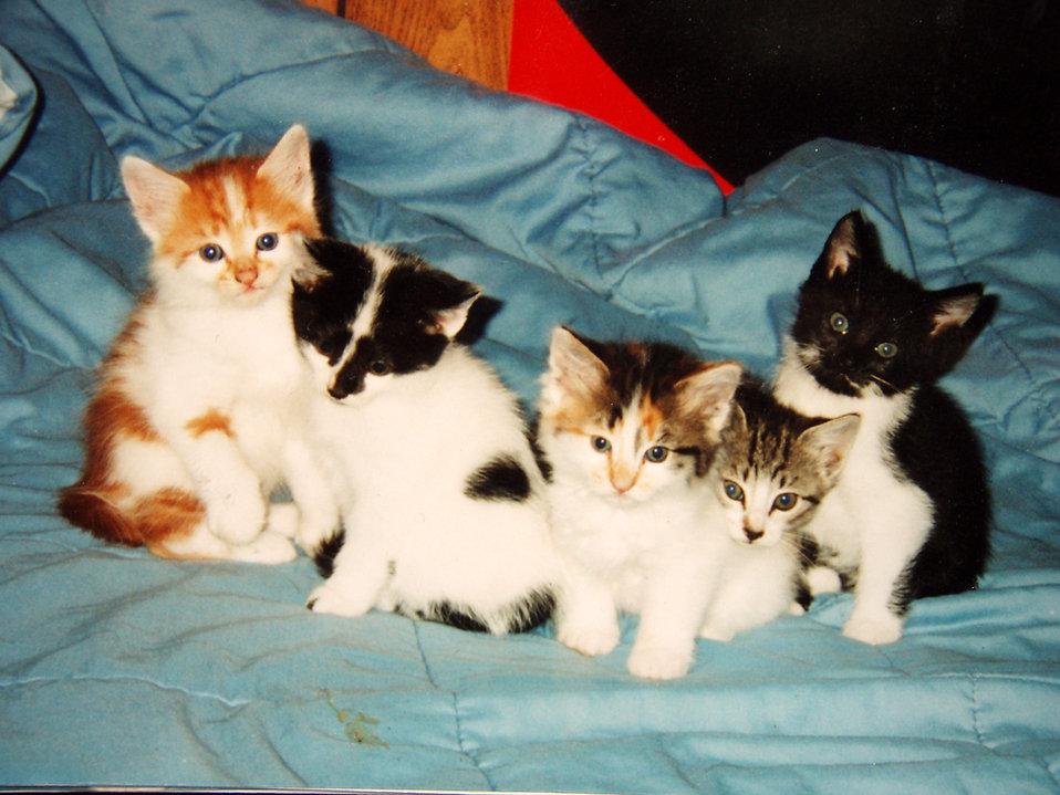 Плюсы и минусы пребывания кошки в доме