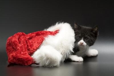 Одёжки для кошки