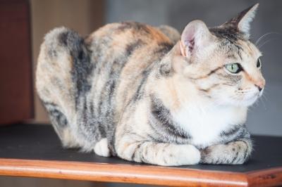 Какова продолжительность жизни кошки?