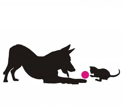 Собака и кошка: добрососедство