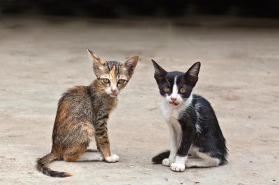 Вторая кошка в доме: кого выбрать?